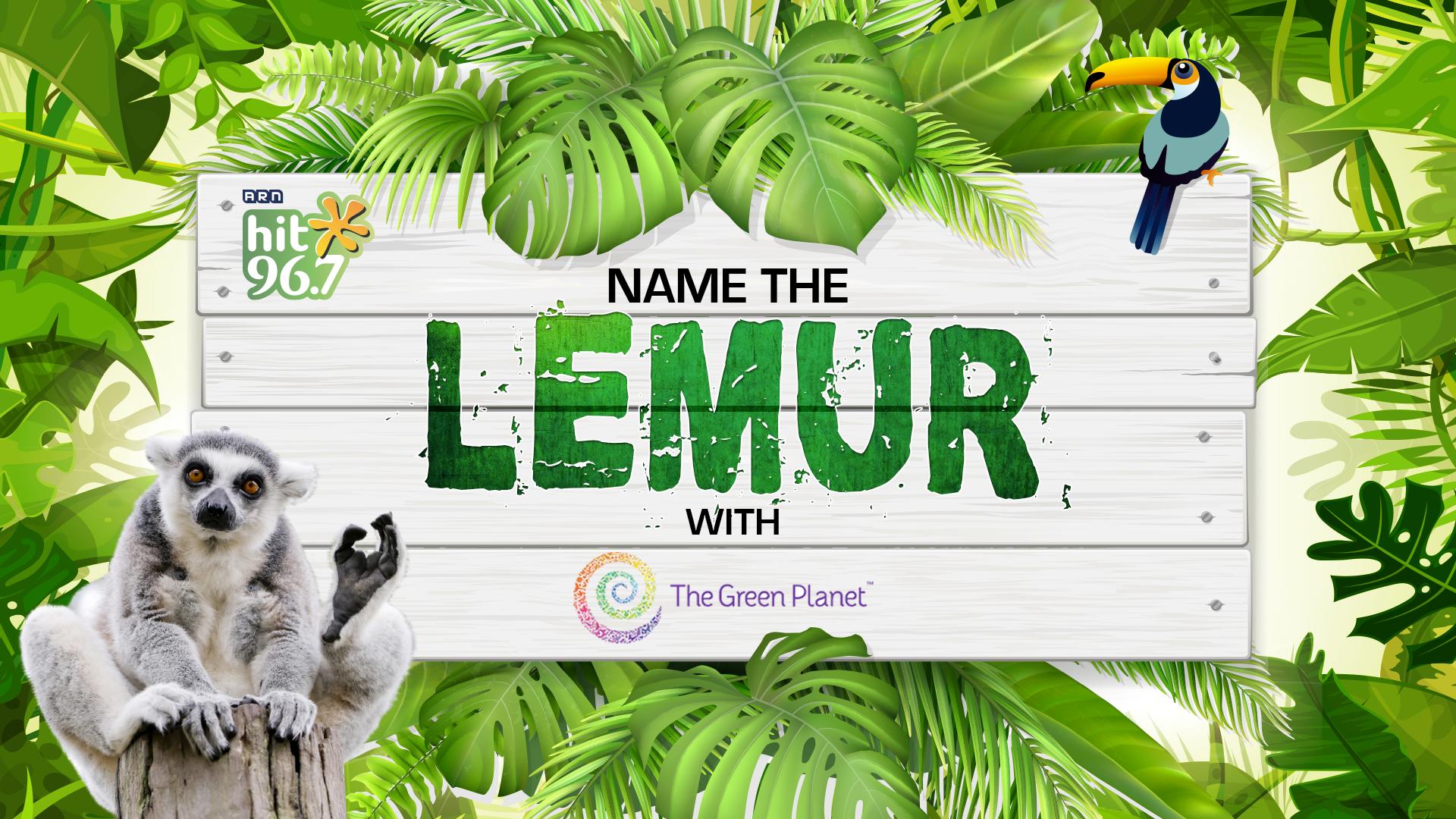 Name The Lemur