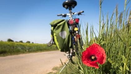 cycling royalty free