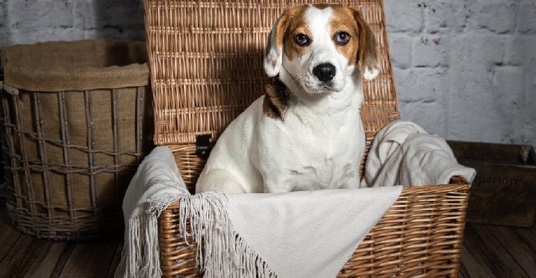 Dog hamper stock
