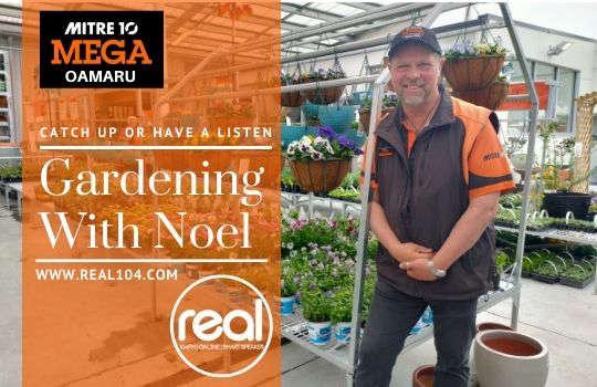 Gardening with Noel and Mitre 10 Mega Oamaru