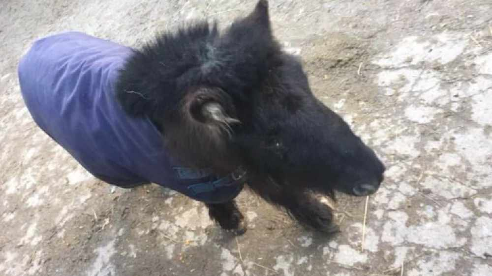 LISTEN BACK: Neil spoke to Patricia who saved a pony on the Northside in December
