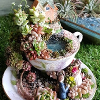 Teacup gardens are a thing!